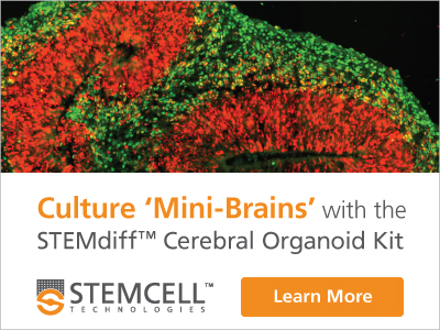 Add a new dimension to your research by using the STEMdiff™ Cerebral Organoid Kit to generate cerebral organoids that recapitulate the developmental processes and organization of the developing human brain.